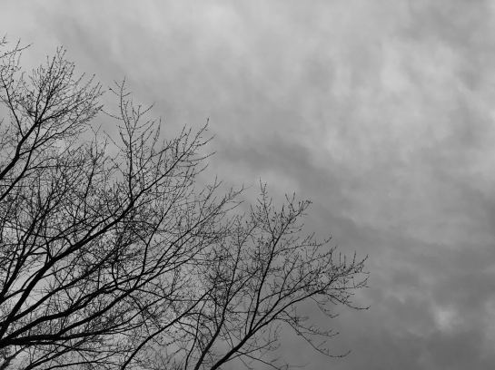 tree-and-clouds